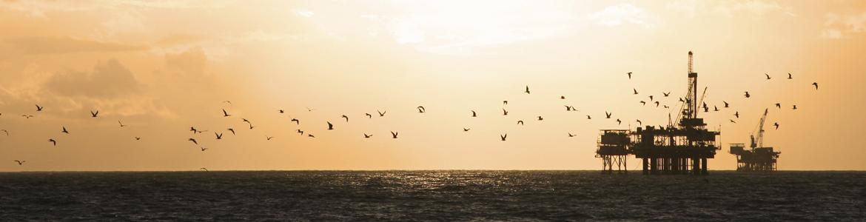 oil-rig-birds